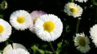 Flowers in spring video