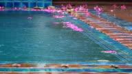 Flowers in the pool video