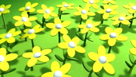 flowers in the sun video