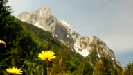 Flowers, mountain and hill with trees on sunny day. video