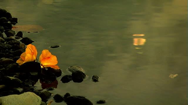 Flowers on moonlight river video