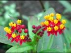 Flowers Sway video