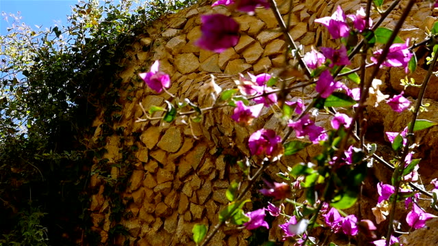 Flowers under bird nests in the terrace walls in Antoni Gaudi's Park Guell, Barcelona, Spain video