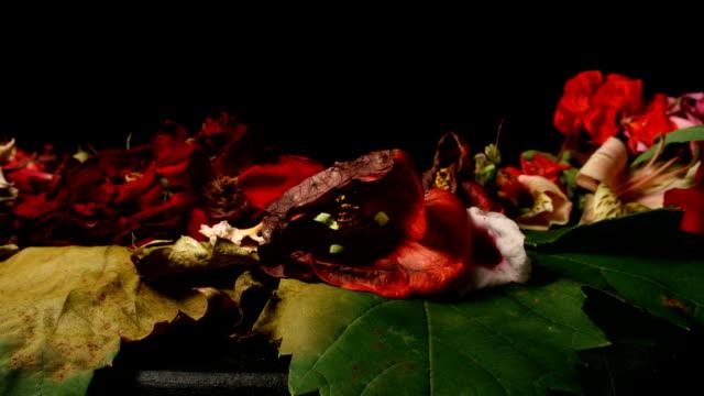 Flowers wilt/bloom video