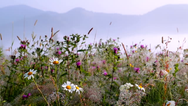 Flowers with Dew Drops. video