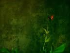 Flowers_green)PAL/NTSC) video