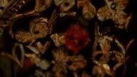 Flowerwall video