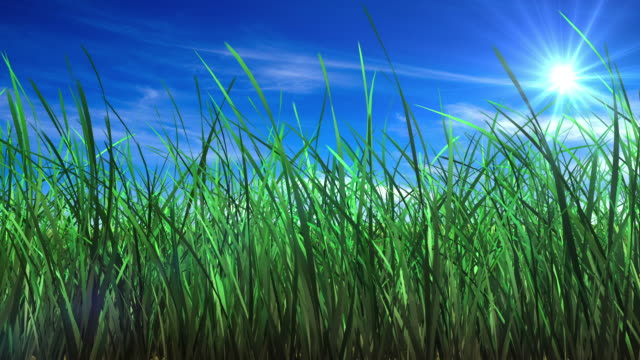 Flowing grass Background video