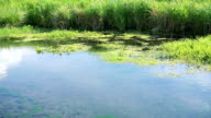 Flowing river and green reeds video