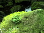 Flowing Water and Moss video