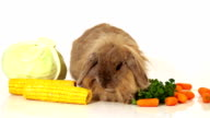 fluffy rabbit with vegetables on white video