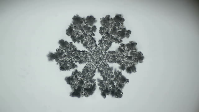 fluffy snowflake melts under the microscope video