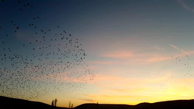 Fly Birds video