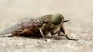 Fly Macro video