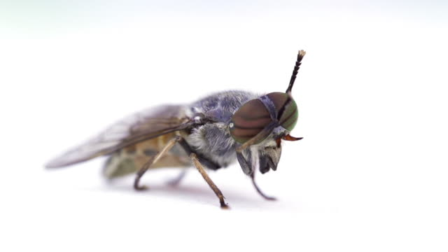 SLOW MOTION: Fly video