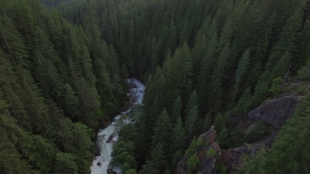 Flyback Aerial of River in Forest Valley with Thick Trees video