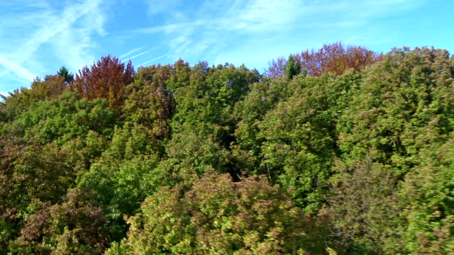 Flying Above Autumn Trees video