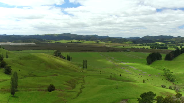 AERIAL: Flying above beautiful lush green landscape with agricultural fields video