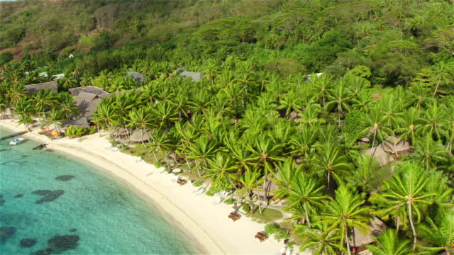 AERIAL: Flying above beautiful white sandy beach with sun lounger daybeds and secluded beachfront bungalows lush palm trees on gorgeous exotic island Bora Bora in sunny summer video