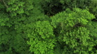 AERIAL: Flying above dense overgrown rainforest and over a quiet jungle river video