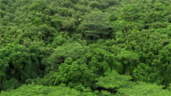 AERIAL: Flying above jungle thick with trees and overgrown forest wilderness video