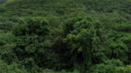AERIAL: Flying above lush dense jungle overgrown forest wilderness video
