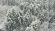 AERIAL: Flying above mysterious snowy forest in winter video