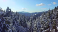 AERIAL: Flying above snowy forest in the mountains video