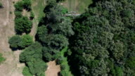 Flying Above The Trees on The Quadrocopters video