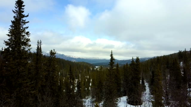 Flying above the winter forest in mountain landscape video