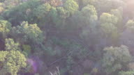 Flying above woods video