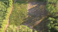 Flying above young forest 4K aerial shot video