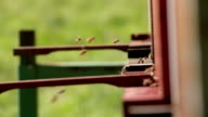 Flying bees around beehives video