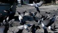 Flying Birds Super Slow Motion video
