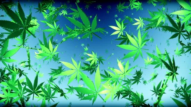 Flying cannabis leaves on dark blue video
