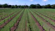 Flying center row forward looking at crops Aerial Shot over Wine to Market or Farm to Market in Austin Texas video