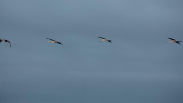 flying cranes video