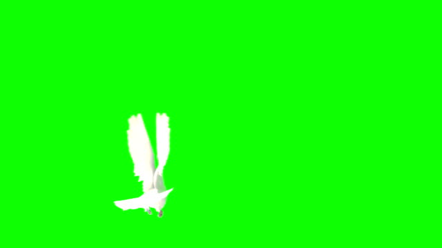 Flying Dove On A Chroma Key (Super Slow Motion) video