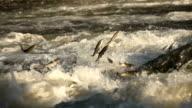 Flying fish video