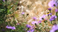 Flying honeybees and the aster video
