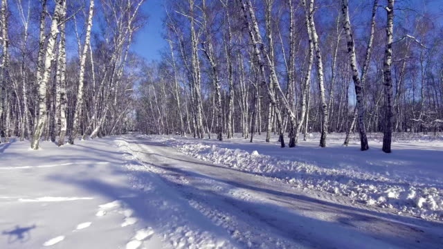 Flying into the wood between the trees strains in winter video