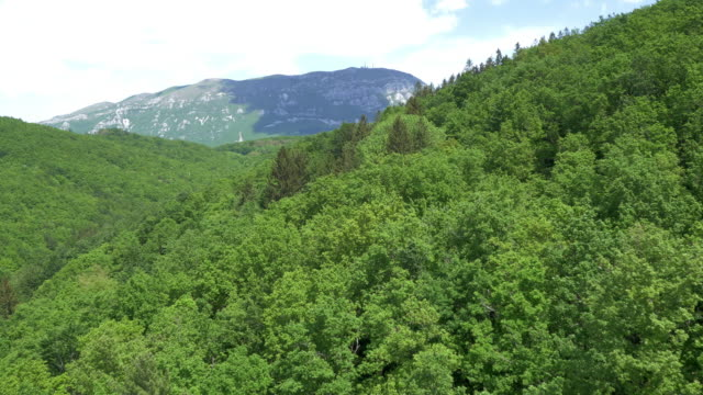 AERIAL Flying over a dense green forest video