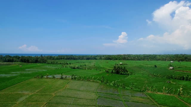 Flying over asian rice field terrace and village in daylight. Bali, Indonesia video