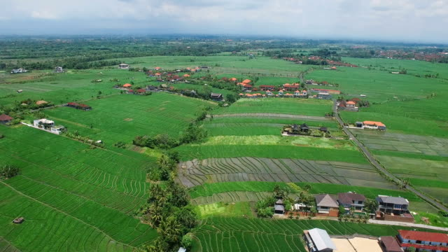 Flying over asian rice fields and village in daylight. Bali, Indonesia video