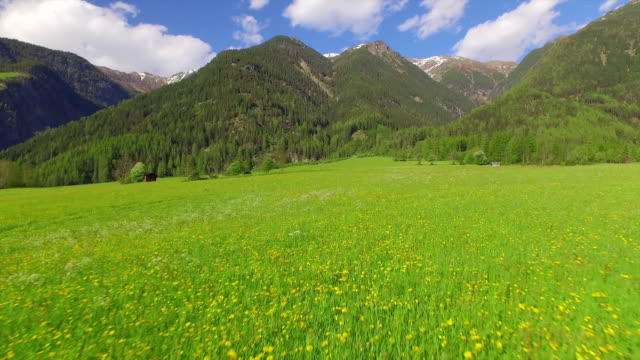 AERIAL: Flying over beautiful flowering meadow below the mountains video