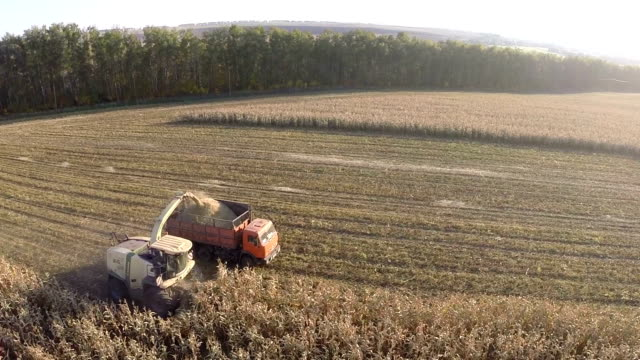 Flying over combine and truck harvesting crops video