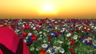flying over field of flowers at dusk video