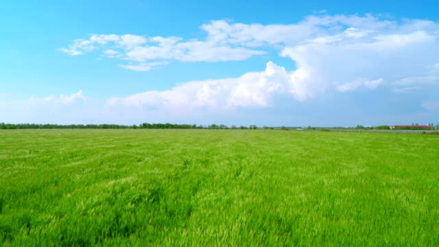 Flying over Green Wheat Fields video