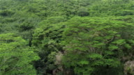 AERIAL: Flying over lush acacia canopies in magnificent primeval forest jungle video