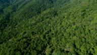 Flying over lush jungle, Rio de Janeiro, Brazil video